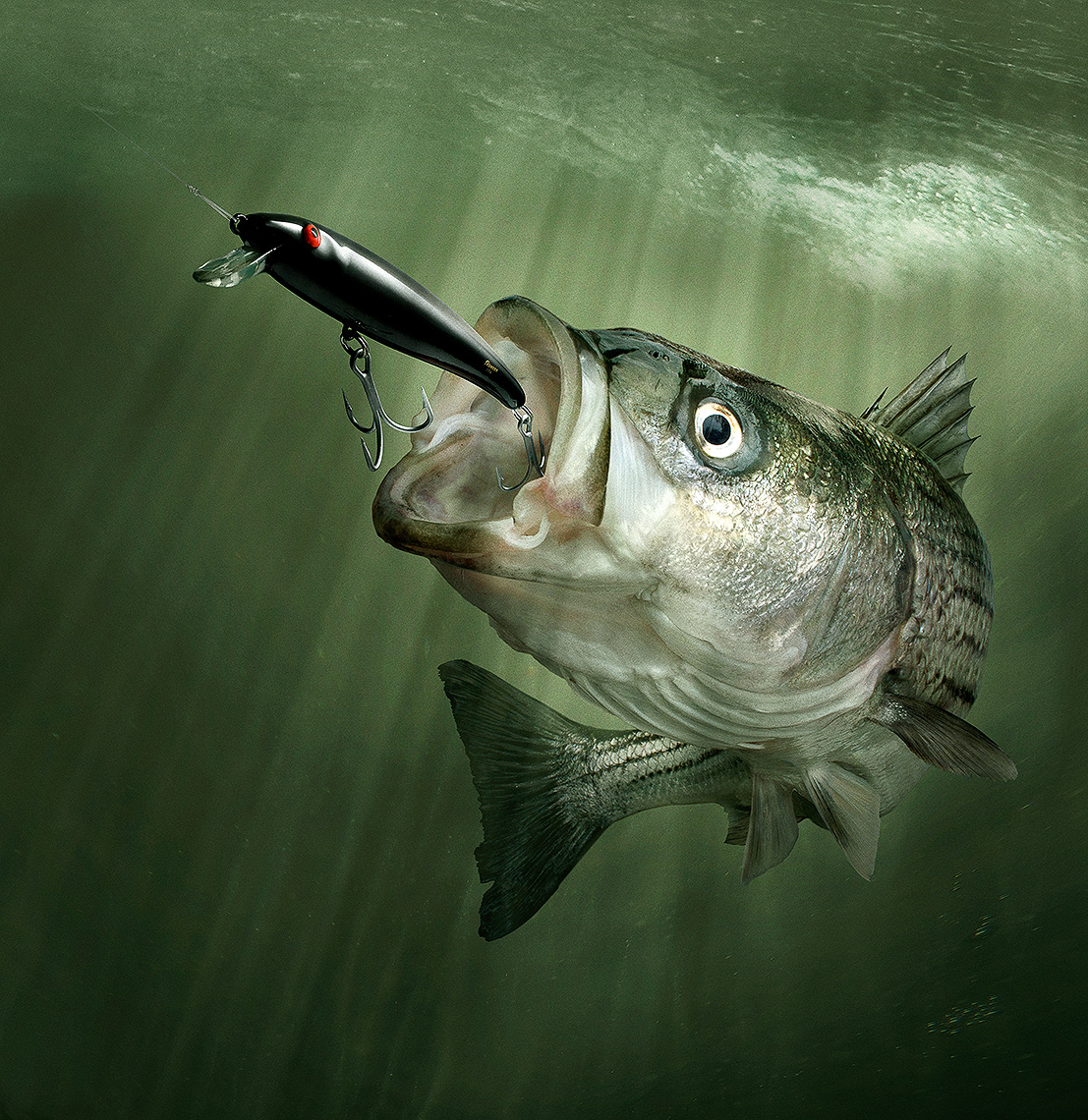 Striped bass, striper fishing with bomber lure by John Kuczala