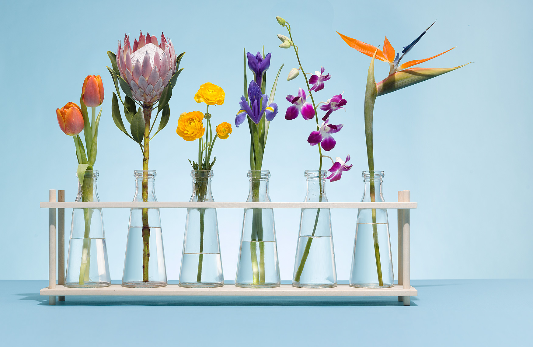 Diverse and beautiful flowers in beakers photo by John Kuczala