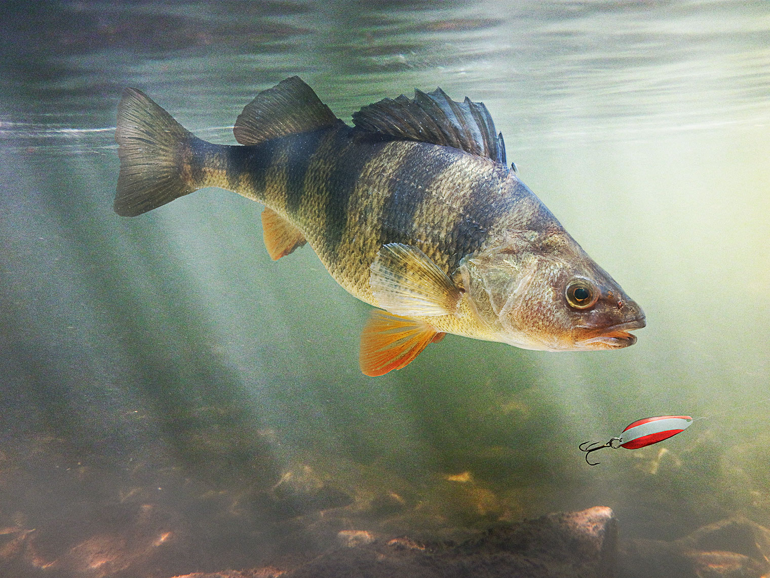 Yellow Perch fishing by John Kuczala